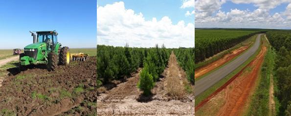 Weiterleitung zu Miller FOrest Waldinvestments