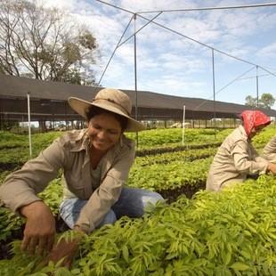 Forest Finance: Waldsparen wieder verfügbar