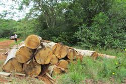Miller Forest: Neues Waldkaufangebot in Paraguay