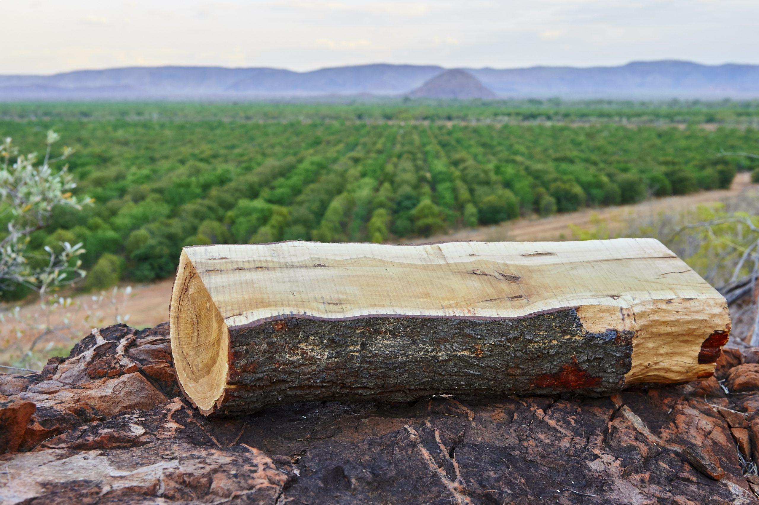Jäderberg: Beteiligung an Sandelholzplantagen wieder möglich