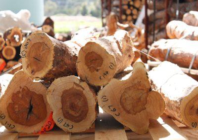 Jetzt bereits ab 500 Euro in Sandelholzplantagen investieren