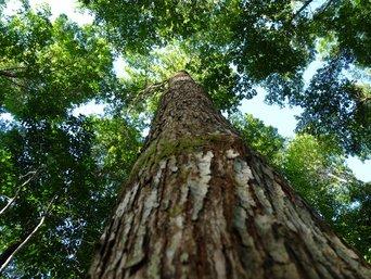 WaldSparen VI: Mit kleinen Beträgen in ökologischen Mischwald investieren